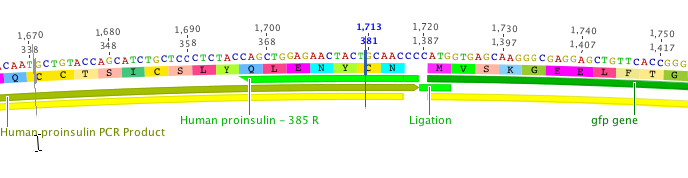 Simulate molecular cloning operations including assembling fragments with Gibson Assembly.